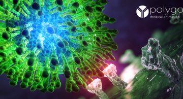 virus c - HCV